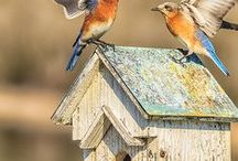 that's for the birds / by Teri Smith