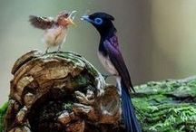 Animals Of All Kingdoms.... / by Deborah Sydnor-Imhoff