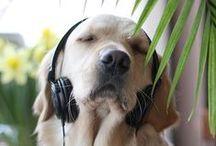 Musica... maestro!