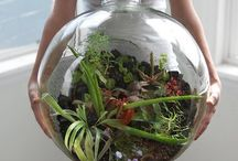 A World in a Bottle / Terrariums and fairy gardens