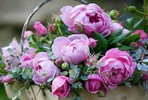 Exotic flowers to admire / Beauty to enjoy  / by Dan Goodine