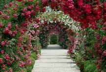 Zielone Forum Świat Ogrodów / Piękne ogrody