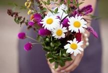 Piękne kwiaty. Świat Kwiatów.