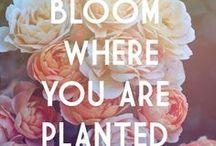 plants - rośliny