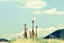 The Wonders of South Africa / From the beautiful wildlife to the exotic backdrop that surrounds it.