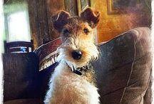 Fox-terrier passion / Le fox-terrier, mascotte de la Maison Petrusse, à chaque collection réinterprété :)