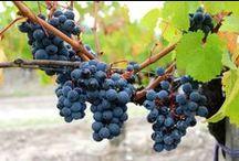 Au cœur des vignes / Paysages de vignes et harmonies de couleurs
