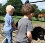 Hobby Horses / Hobby horses made by Laurel Designs