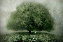 nature, fleurs, arbres...