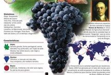 Wine Varietals / Grapes used to make wine.