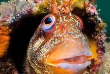 UnderWater / #Ocean Life #Sharks #Clown Fish #Dolphins #Jellyfish #Sea anemone #crab #whales #sea turtle #coral #octopus #sea world #sea life #ocean deep #scuba #underwater #underwater sculptures / by Karen