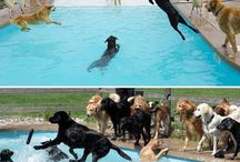Funny animals and photos! / ...Or insanely adorable animals