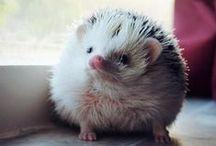 cute little chubbers  !! / by kim gesumaria