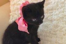 BLACK kitties / by kim gesumaria