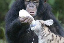 Animal Buddies! / Adorable animal play and love!