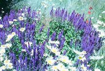 Xeriscaping: ideas for low water garden / Creating efficient planet friendly garden