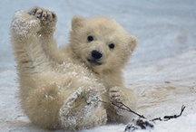 polar bears ❤ / F.A.V.O.R.I.T.E.