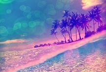 Palms & Paradise ❤