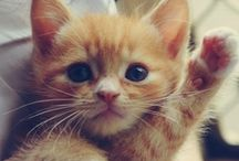 Cute Animals / The cutest animals I could ever find in Pinterest!!