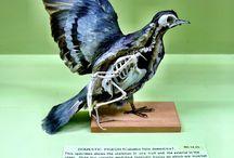 Taxidermy / Historic. Scientific. Artistic.