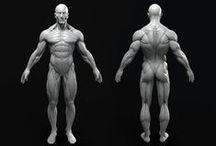 3D models, sculpts