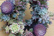 Succulent / Plants and Indoor Gardening