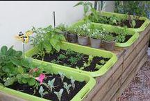 Jardin / Idée pour jardin dans des boites