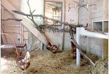 Chicken Coop / Hen and duck houses.