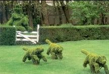 Great Topiary Ideas / Get creative with your hedge cutter! We've found some of the best Topiary to give you some inspiration before you take to the hedge!