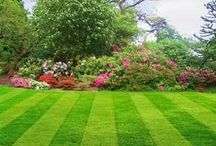 Lawn Inspiration / Lawn and Garden inspiration - some great lawn and garden ideas you could achieve in your own home.  Adapt them and use them to help design your own garden!