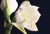 ELLE flowerphotography / www.ellefotografie.nl