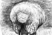 Sheep / Celebration of Sheep - Drawing, painting, printmaking and photography
