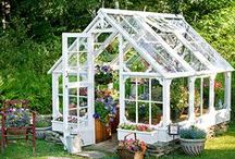 Greenhouses / Find tips on what to do in your home from home - the greenhouse! Browse our fantastic range of greenhouses for sale, as well as inspiration from the greenhouses of dreams!