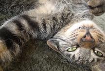 WOOSTAR de JOUR / THE KITTAH CAT AT TEH HOPP ホップの駐在猫ウースターの毎日ログです。 ぐーすかごーすか寝ては起きてときどきだかだか走る回る日々。