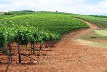 Domaine Kikones !!! / Pictures from Domaine Kikones Wines etc...