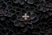P h o t o g r a p h y  |  Jewellery
