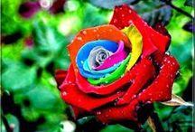 Paisagens da Primavera! / Setembro é o mês da chegada da primavera! Flores, cores e amores!