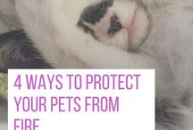 Furbaby Tips, Pics + More / I'm an animal lover so here a pins of cute pets and other animals; even my own pets make an appearance here.