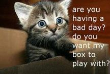 Cat + Box / Cats and Boxes.
