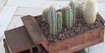 Kaktuszok, pozsgások