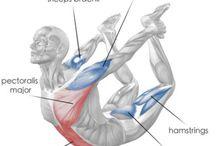 body : ejercicios y tips
