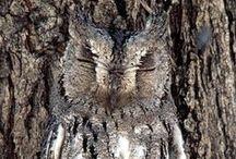 Owls ● ◯