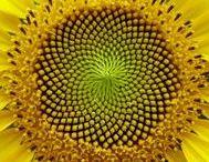 Natureza: perfeita simetria!
