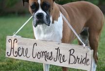 Wedding ideas  / by Karen Derx