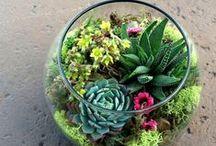 Gardening - Landscape - Plants - Flowers - Terrariums