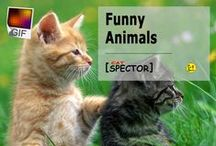 Funny Animals (+GIF) / Only the most funny and cute animals ฅʕ•ᴥ•ʔฅ