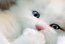 Cats Cats Cats
