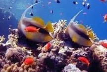 beauté de la mer