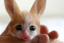 Cute Things / cute things, fuzzy things, babies, puppies, kittens, cuddly things