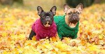 Zizterz Dog / Handknitted quality knitwear made in Estonia | Only natural yarn (100% merino wool) | Shop: zizterz.etsy.com